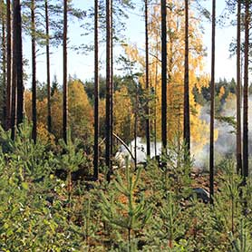 Metsäbiotalouden asiantuntija- ja kehittämispalvelut